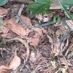 Live snake inside Bonny Nature Park
